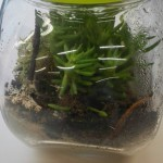 ecosystem-in-the-bottle_2